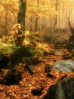 Class A Second Place, Autumn Walk 3 by John McLane