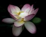 1st-b-lotus-dennis-ryan