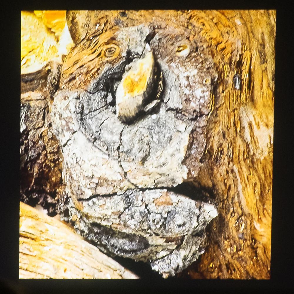Tree knot(s) by Bill Hooper