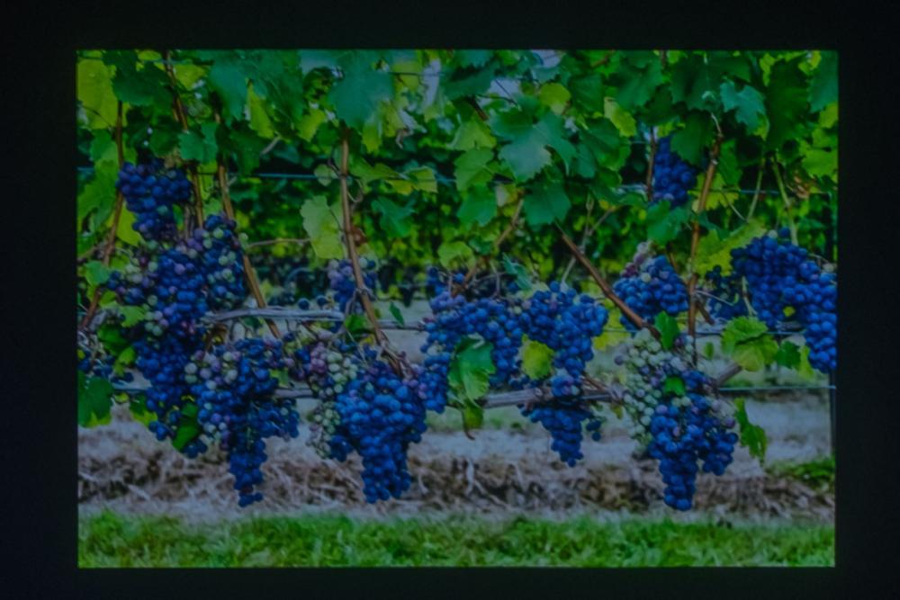 Vine(s) by Karen Leaf