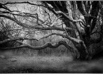 3rd_B&W_Comp1_Spooky Tree_GDetonnancourt