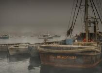 3rd_B_Foggy Harbor_Miller Bud