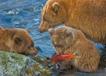 AA~1st~Alaskan Grizzly Family~Doo Mary