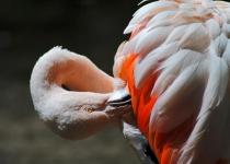 B~2nd~Flamingo Fire~Boyajian Tracey