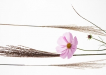 3rd~22~B~High Key Flower~Jean Leslie