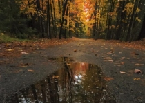 1st_ColorPrintB_AutumnRainPuddle_WBeckwith_Open2