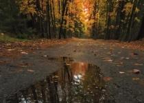 1st_ColorPrintB_AutumnRainPuddle_WBeckwith_Open2