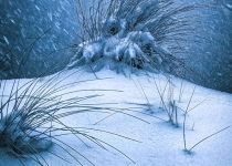 2nd~A~Snow on the Dune~Chris Mullen