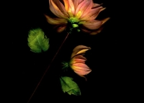 2nd_ColorPrintA_PinkFlower_ABradley_Open4