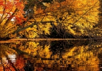3rd_Arching-Fall-Foliage_Noreen-Berthiaume_Color-Print-A
