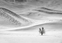 1st_30-pts_BW-Print_Karl-Zuzarte_Yellowstone-Solitary-Tree