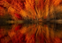 1st_Color-B Print   Gorton Pond by Greg Kniseley
