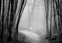 2nd_BW Print  Into the Woods by Owen Erlich