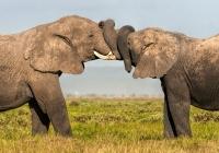 3rd~AA~Kissing Elephants~Doo Mary