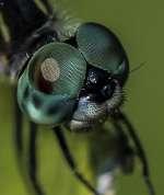 HM~Print~B~Bug Eyes~Fike Matthew