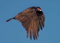 2nd-72~AA~Morning Vulture~Uliss David