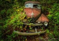 Nature reclaimsw