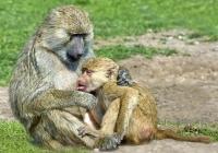 2nd AA~Feeding Baby Boon~Doo Mary