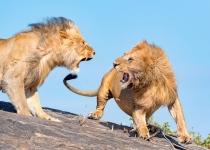 3rd~AA~Roaring Lions~ Karl  Zuzarte M D