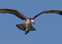 3rd A~Flying with a Catch~Gary Detonnacourt