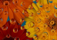 Floral Drops