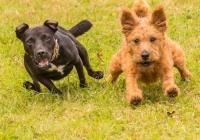 1st_Terrier Racing_Collin  Kimball-Davis_Color Print A