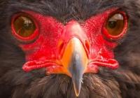 2nd_Bird's Eye View_Colin  Kimball-Davis_Color Print A