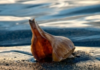 Relaxing Shell on the Shore KATE STEPANOVA