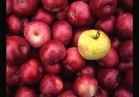 Image-11103-square-crop