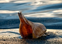 Relaxing Shell on the Shore KATE STEPANOVA