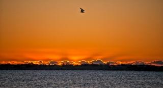 Sunrise by Donna Hughes