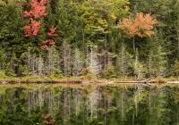 Wildlife Pond - Karen