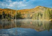 Wildlife Pond 1 - Leslie