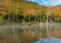 Wildlife Pond 3 - Leslie