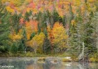 Wildlife Pond 4 - Leslie
