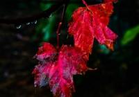 2 leaves - Karen