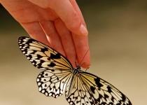 3rd~B~Rice Paper Butterfly~Lauren Lambert