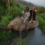 Elephant Jungle Ride