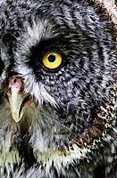 Audubon Society of RI Raptor Weekend