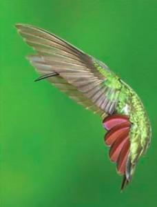 Audubon Magazine 2010 Grand Prize WInner Dennis Goulet