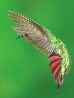 Audubon Grand Prize Winner Dennis Goulet