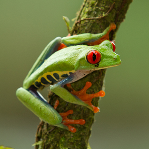 Introduction to Rainforest Photography