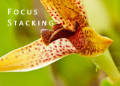 Focus Stacking — Techniques for Increasing Depth of Field