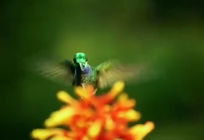On Birds and Bees, a TED Talk