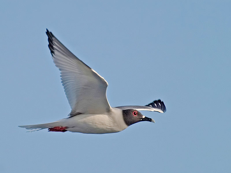 Camera Settings for Birds in Flight