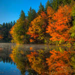 Leaf Peeping Field Trip – Saturday October 20