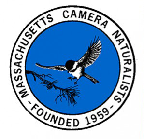 Massachusetts Camera Naturalists International Photo Competition