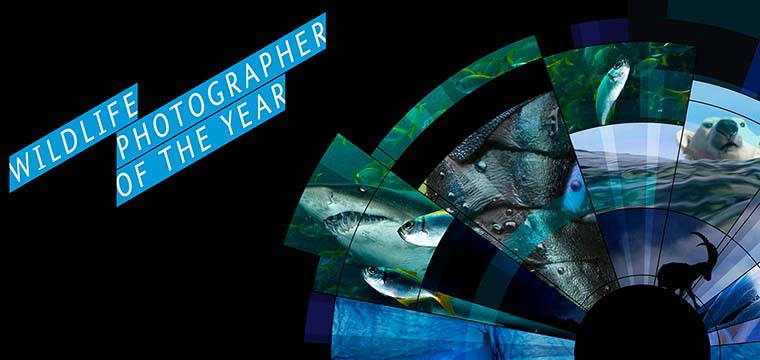 Competition: 2016 Wildlife Photographer of the Year