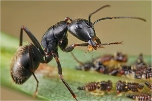 2-Pop-up bracket-1 ant